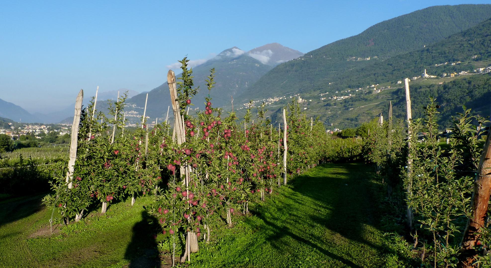 Val Valtellina...05