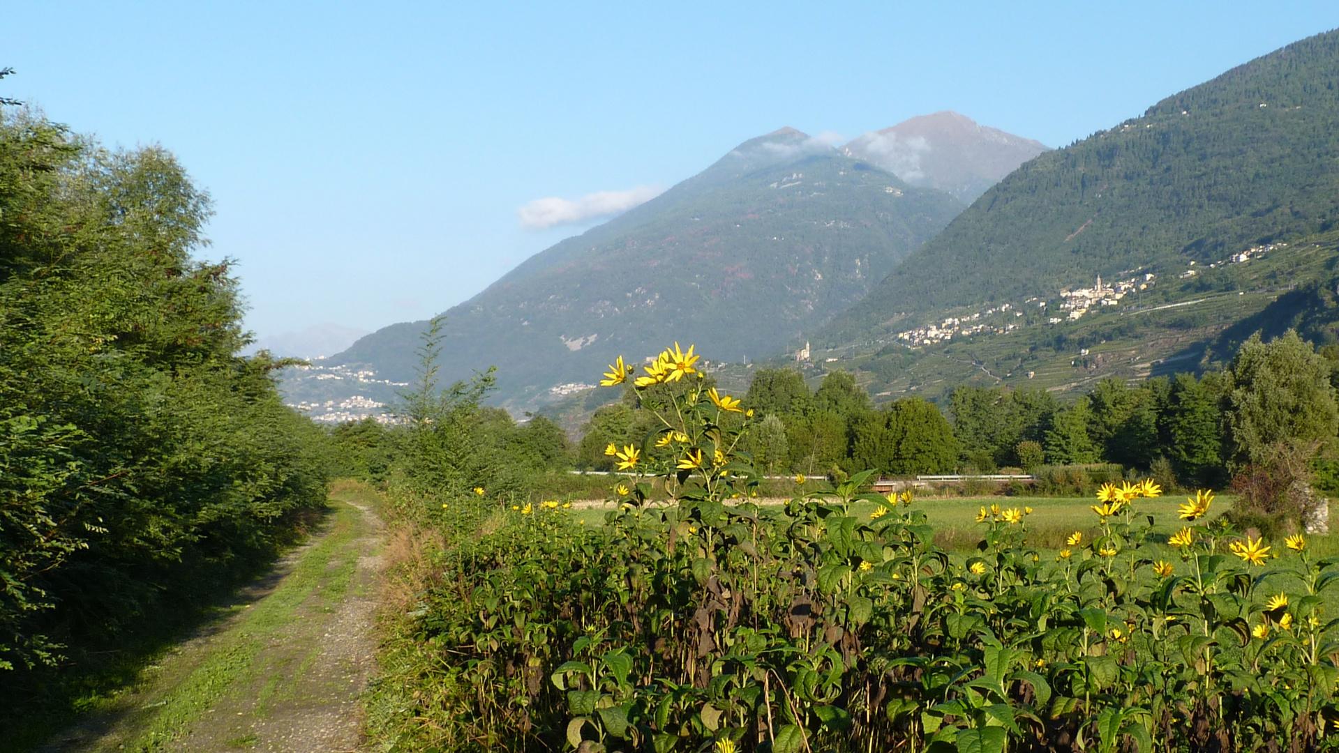Val Valtellina..14 (Italia)