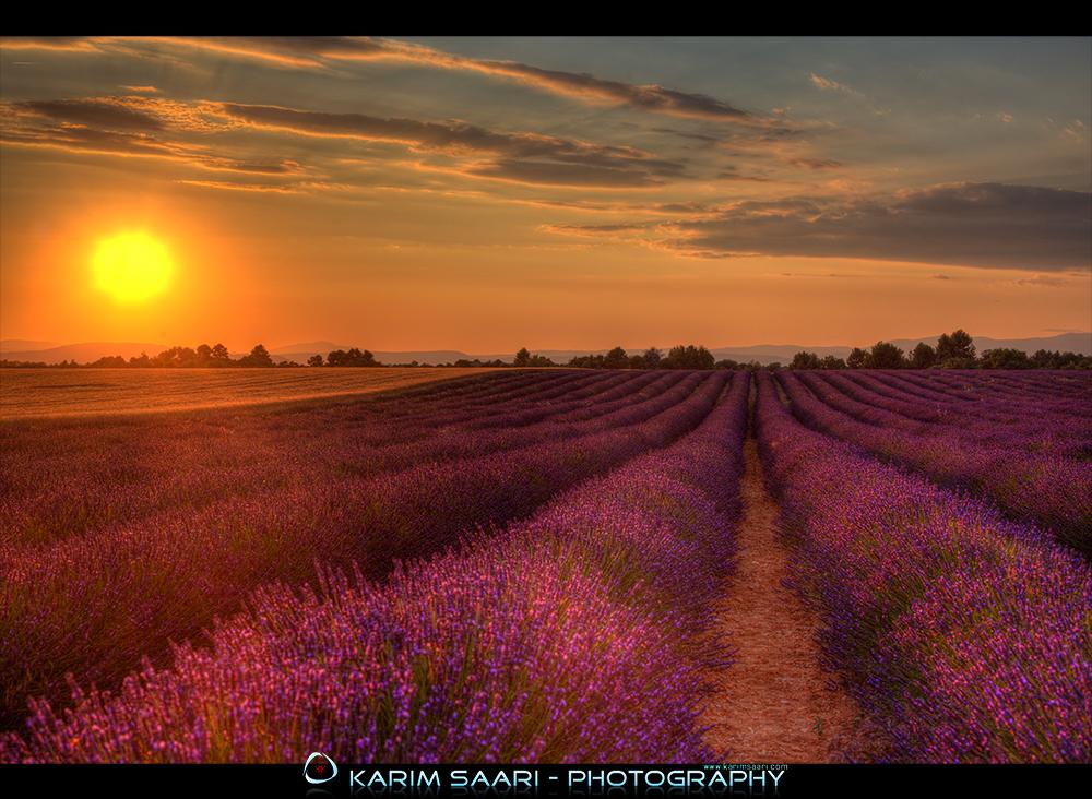 Valensole - Lavender Fields - Provence