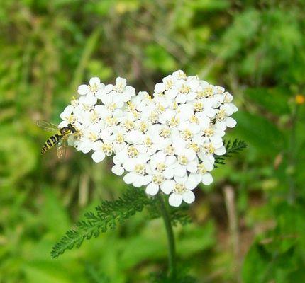 Valentienstag für eine kesse Biene