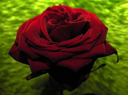 ... valentine...
