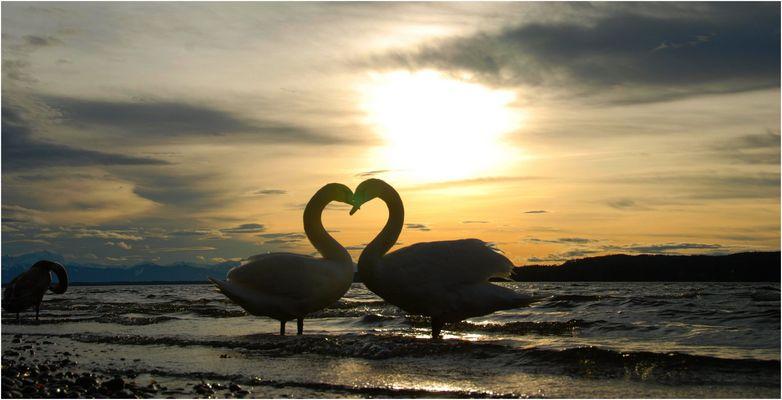 Valentinstag: das Herz