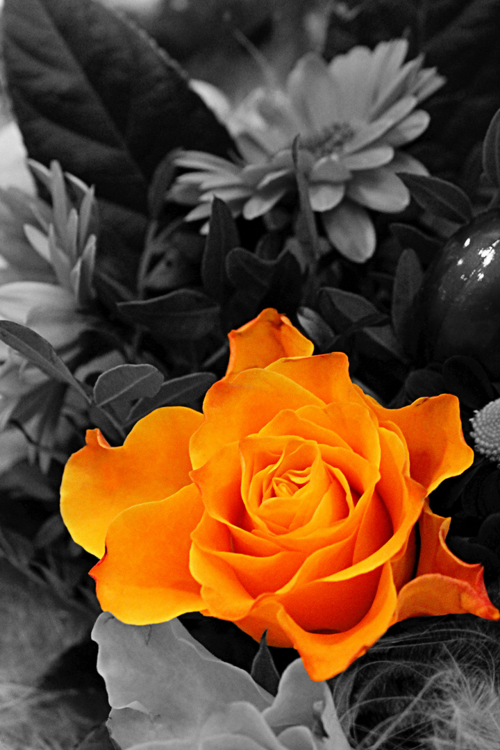 Valentinstags Rose
