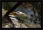 Vallée Borgne in den Cévennes