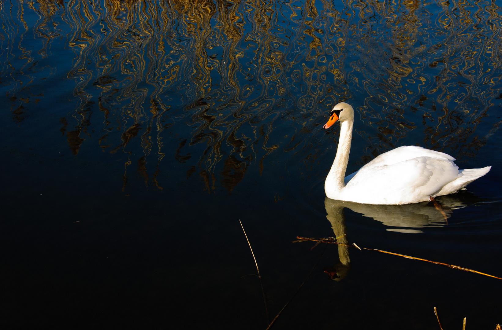 van Swan