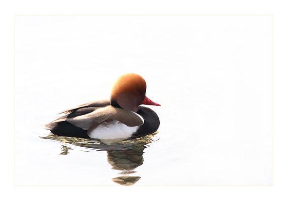 vanity of a lame duck :-)