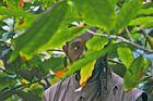 Vanuatu 2013