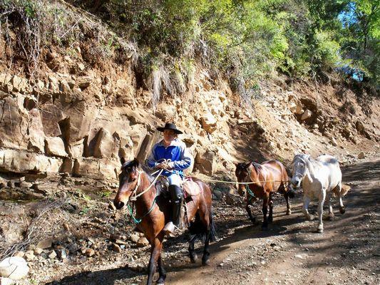 Vaqueano, near Pichirrincon, in Chile.