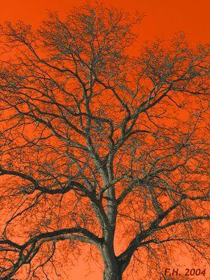 Variation of a tree