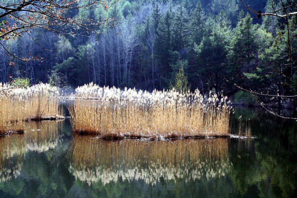 Varner See