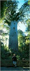 Vater der Wälder