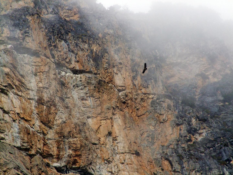 vautour en Espagne