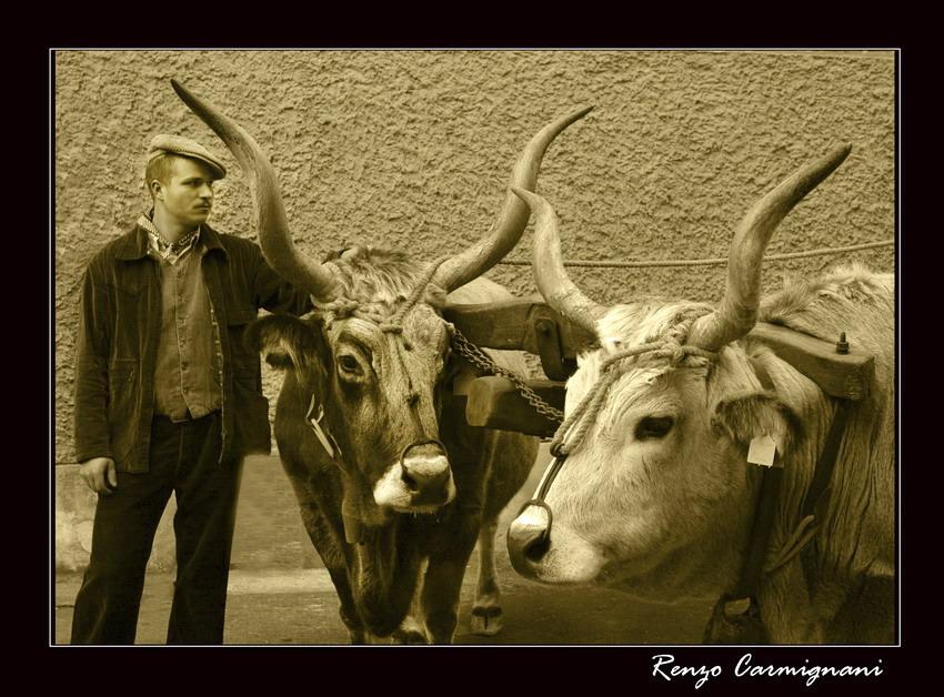 Vecchi tori