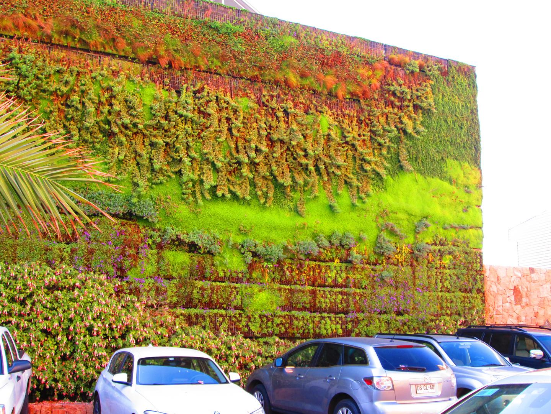 vegetales en pared