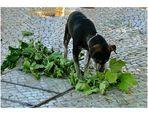 Vegetariano il mio cane?!