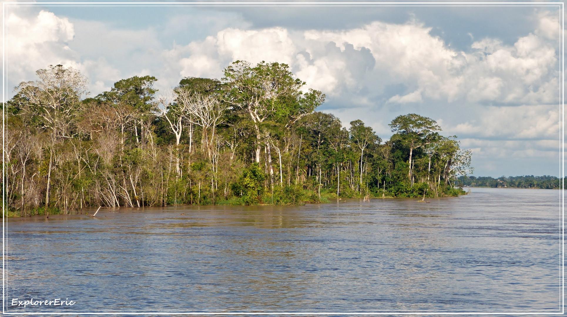 Vegetation am Amazonas-Ufer...............