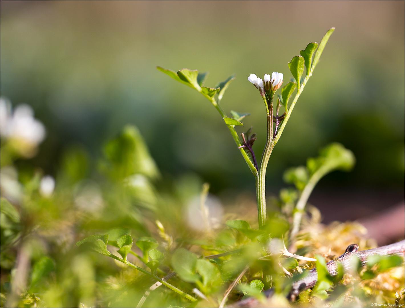 Vegetation am Boden....
