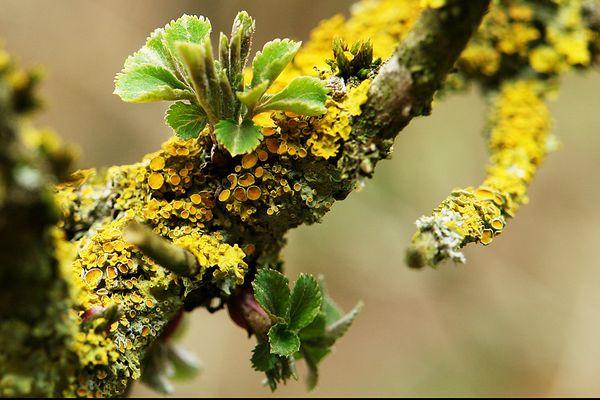 Vegetation im Kalem (2)
