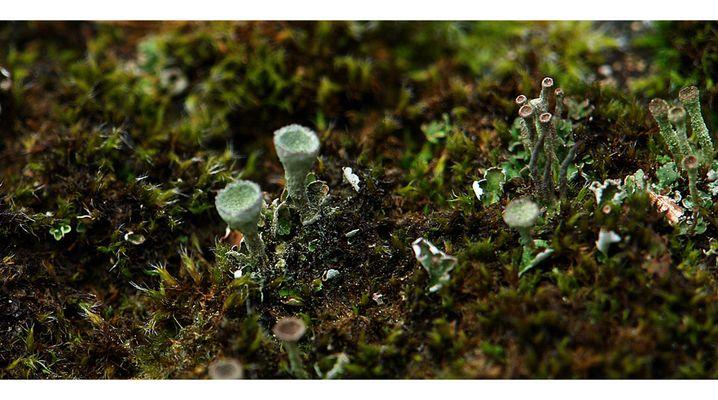 Vegetation im Kalem (4)