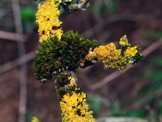 Vegetation im Kalem (6)
