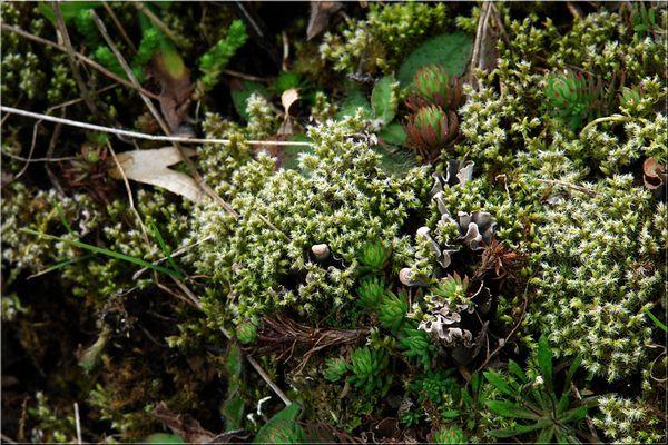 Vegetation im Kalem (7)