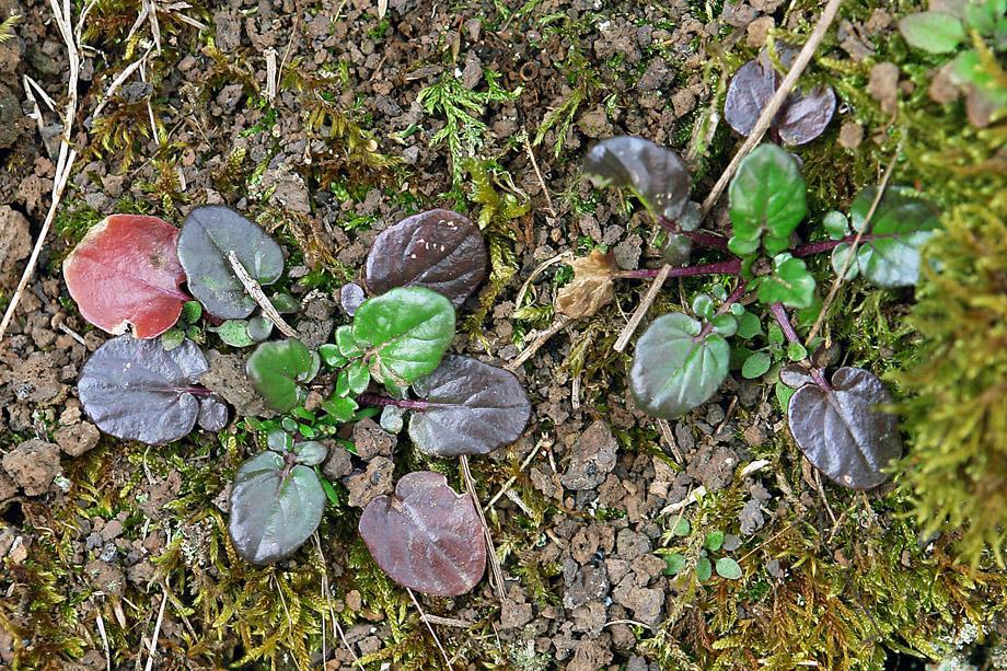Vegetation im Kalem (8)