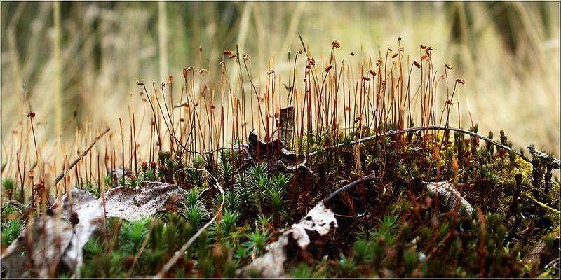 Vegetation im Kalem (9)