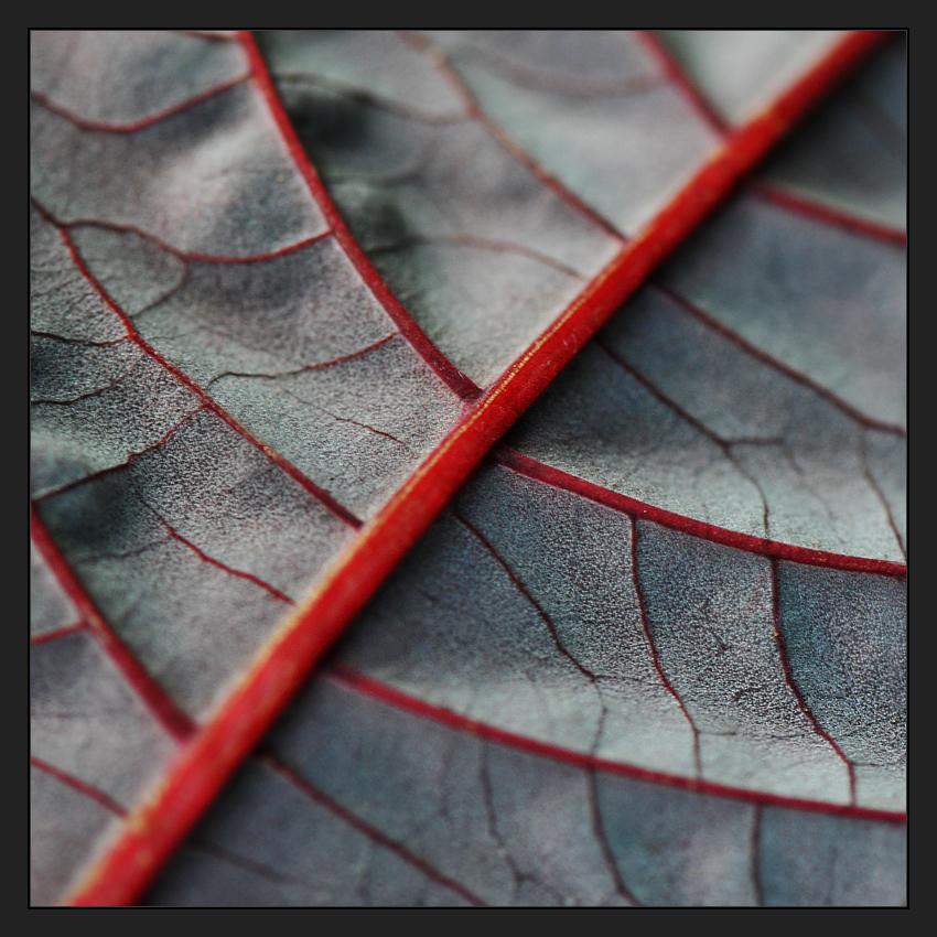 Veins of Life