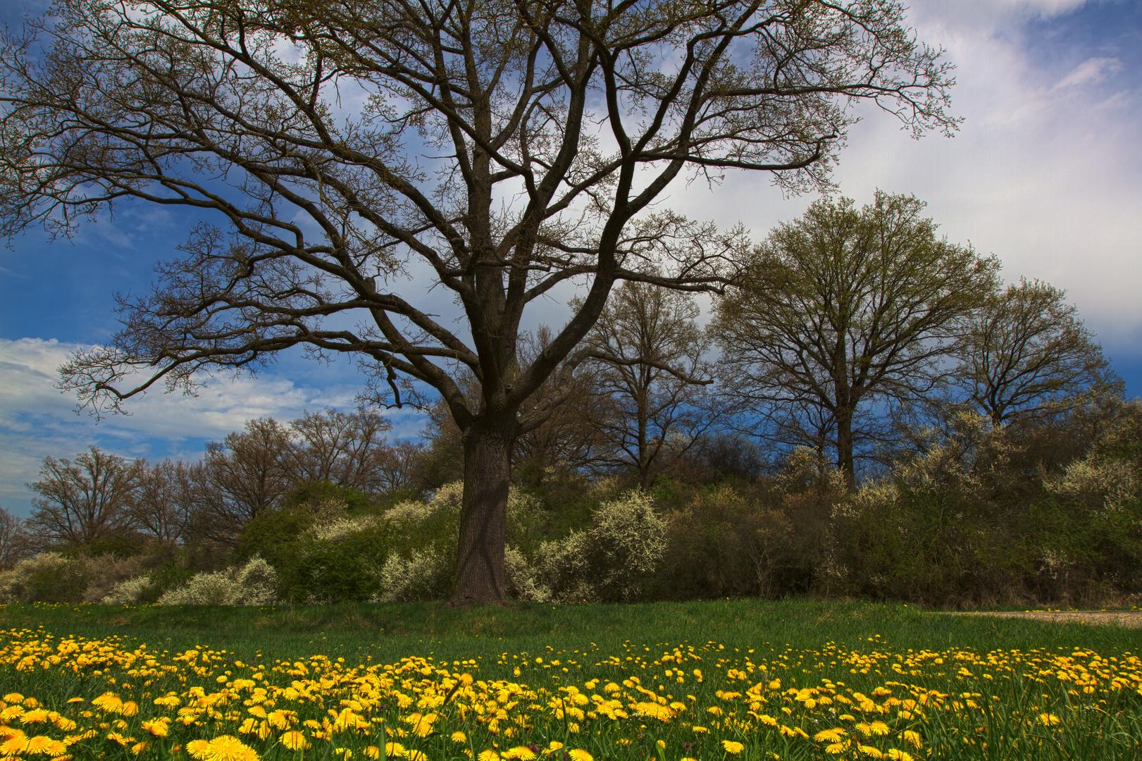 Veitsbronn im Frühling