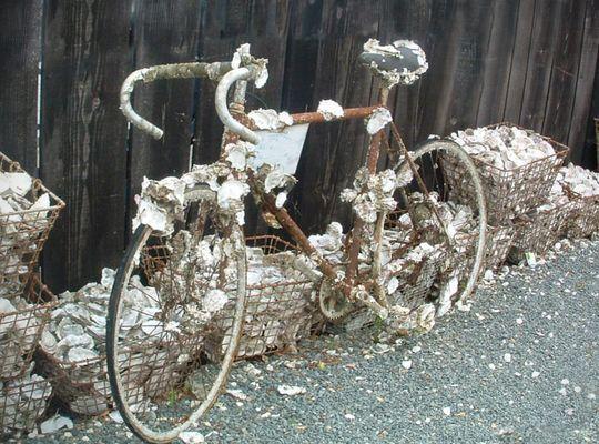 Vélo écaillle