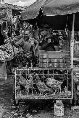 Venditori di galline