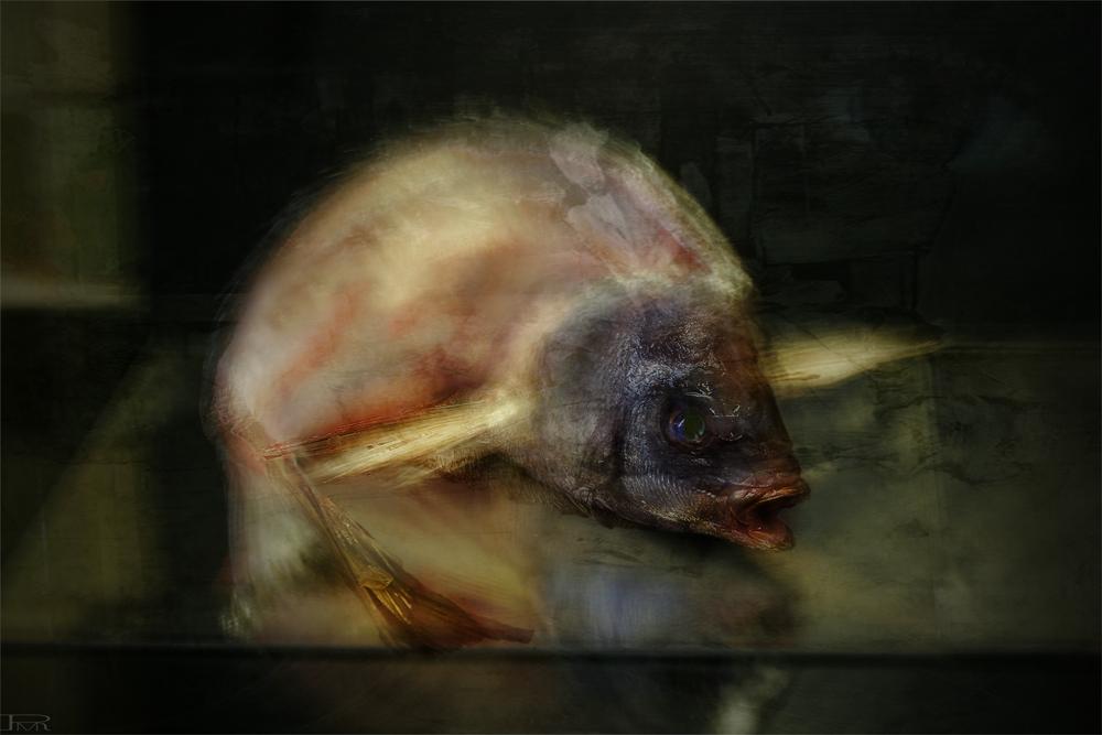 Vendredi, c'est poisson ...