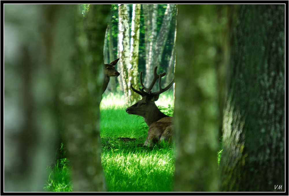 Vendredi matin en forêt de Rambouillet