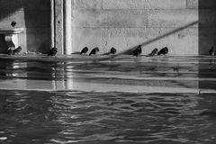 Venedig Acqua Alta 14
