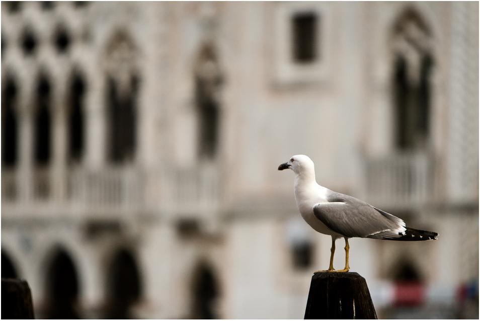 Venedig IX - Campo della Pescaria