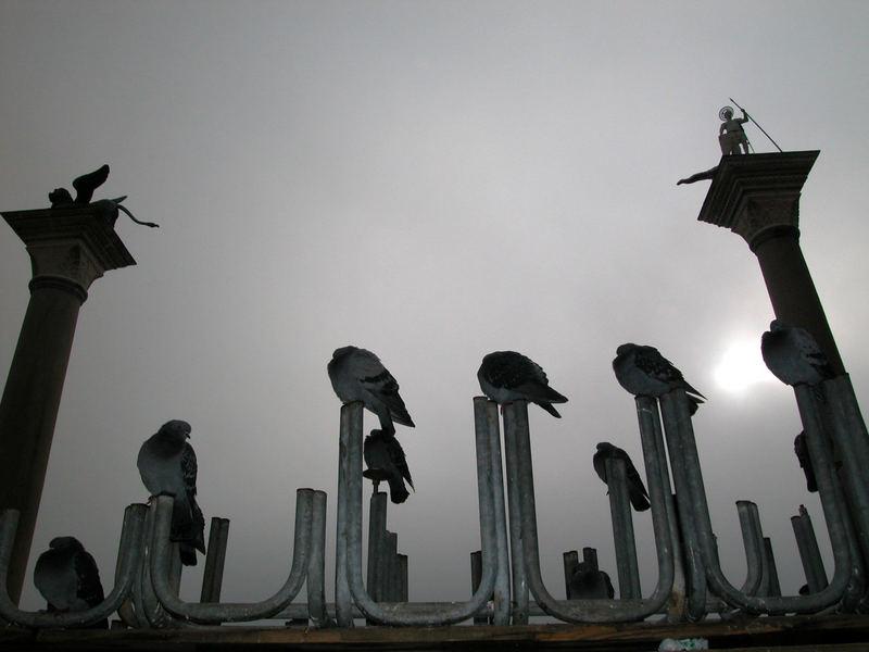 Venedig, Tauben auf der Piazetta, San Marco