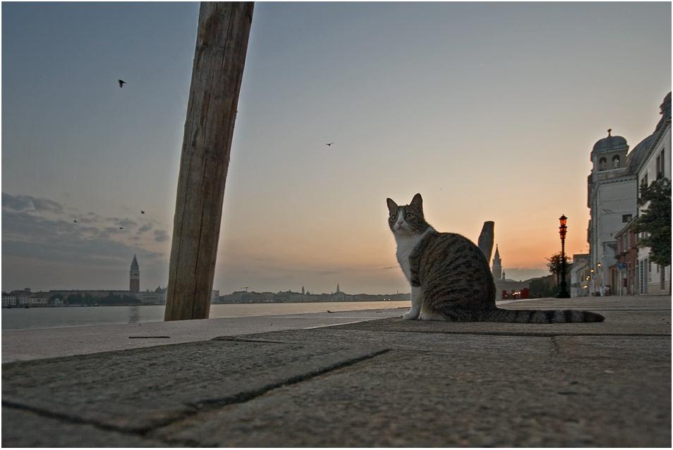 Venedig VIII - Buon giorno