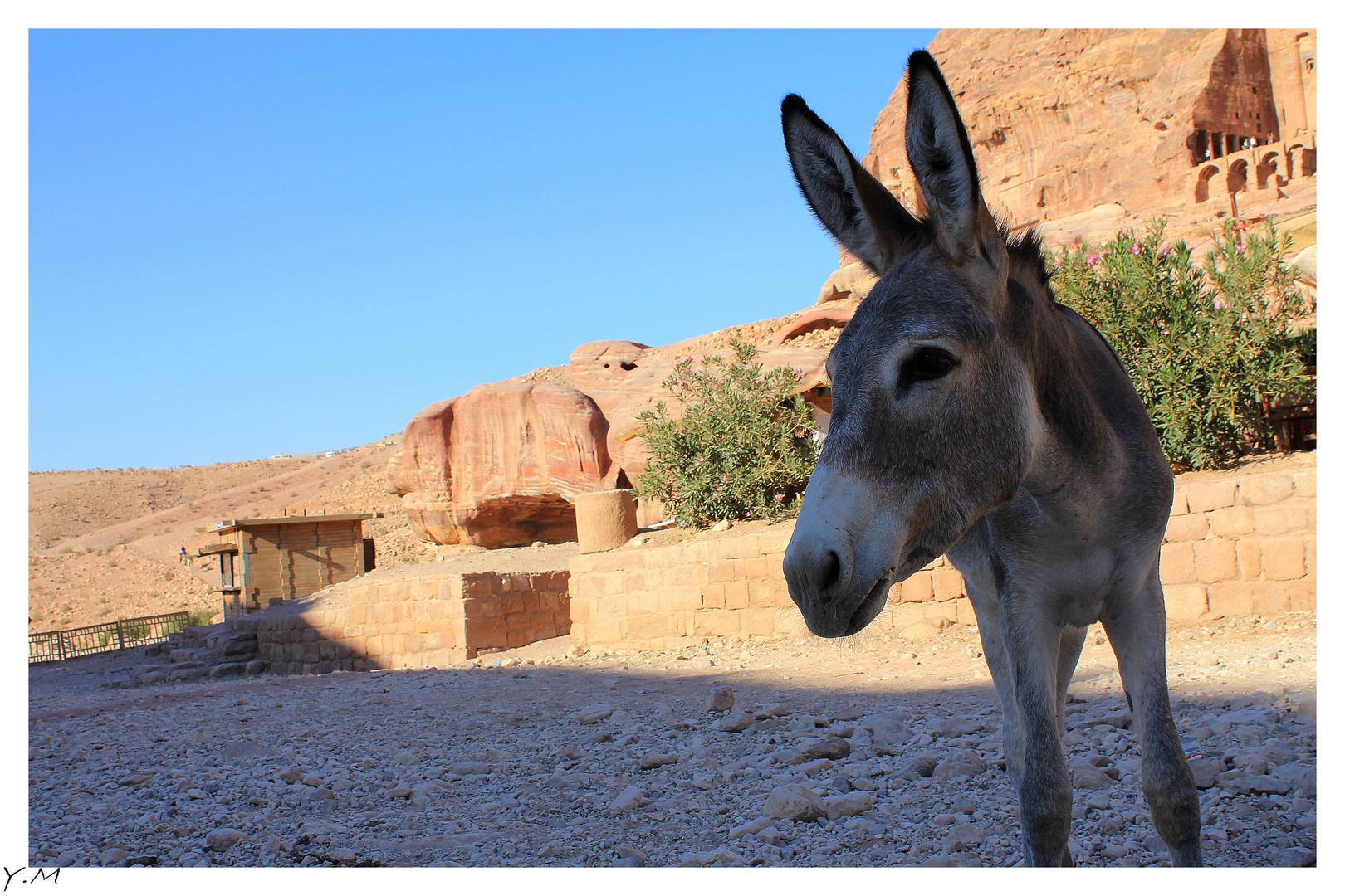 Venez visiter la superbe ville de Petra....