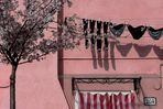 Venezia 37 ...... Burano rosé