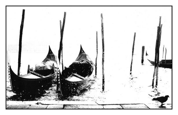venezia 88