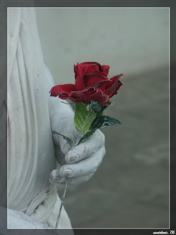 venice rose