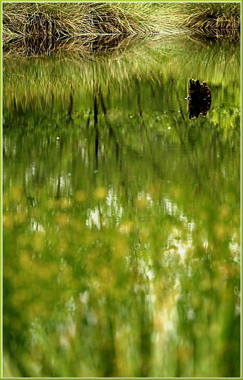 Venner Moor *1