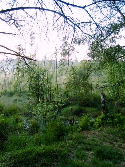 Venner Moor bei Münster