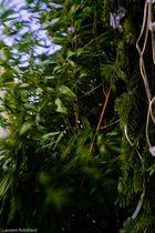 vent bambous