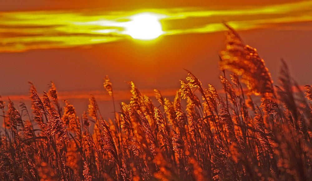 vento..tramonto...barena