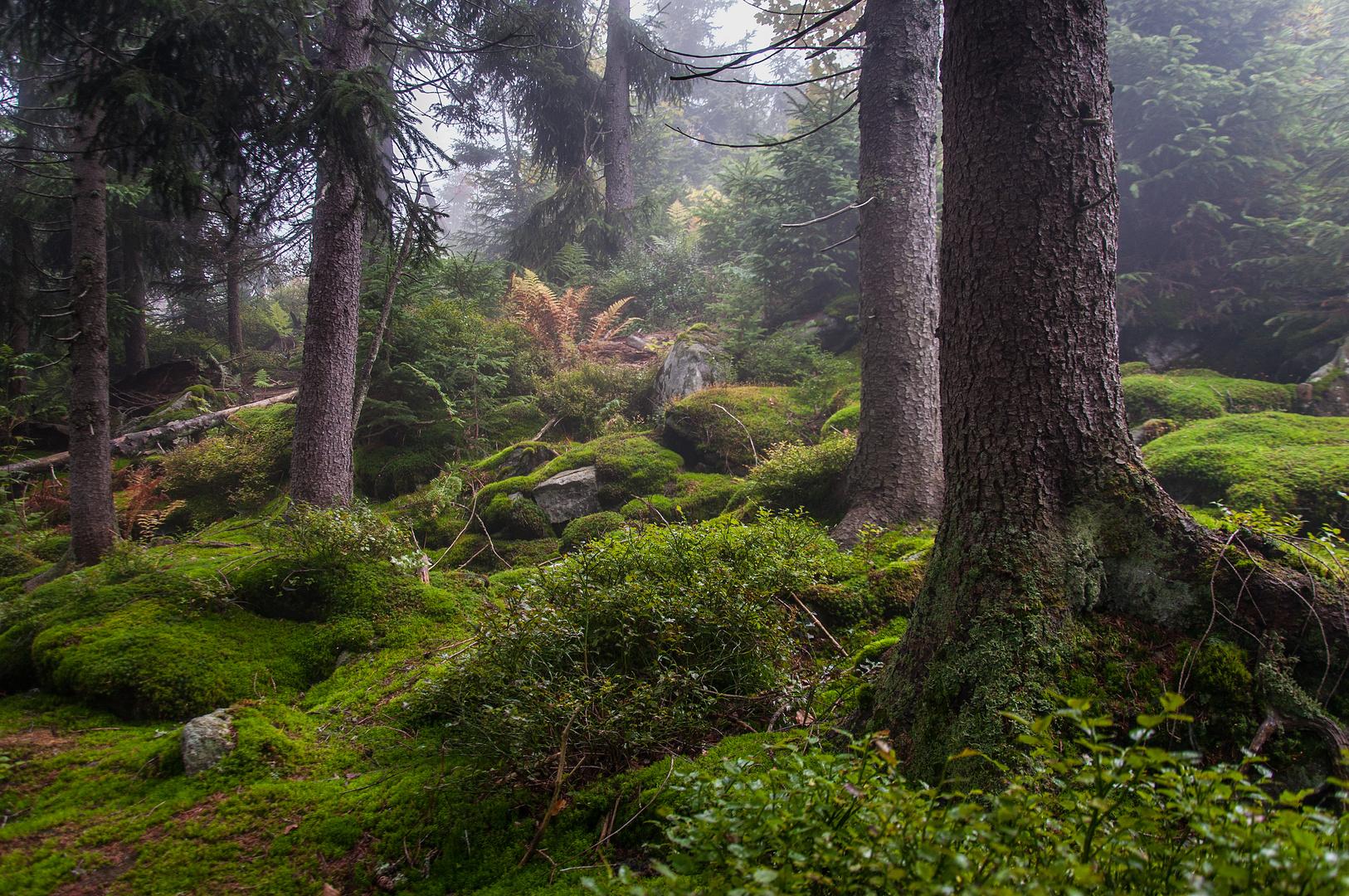 Verborgen im Wald