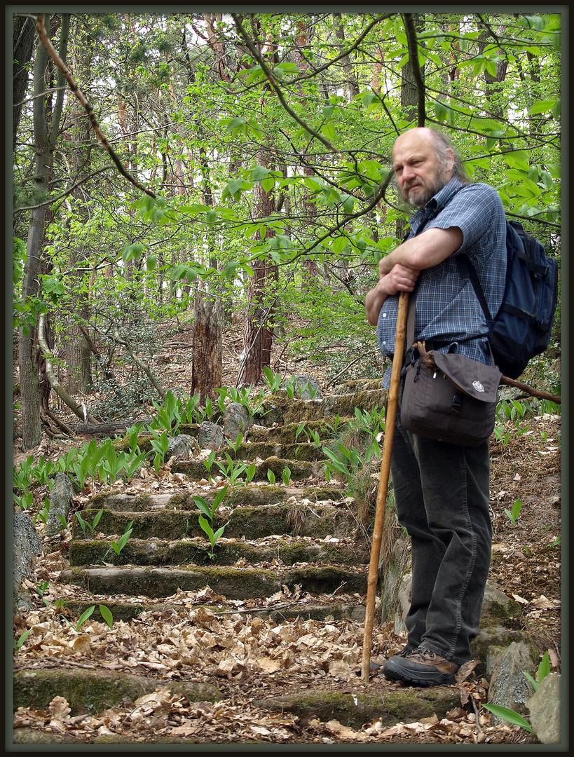 Verborgen im Wald......