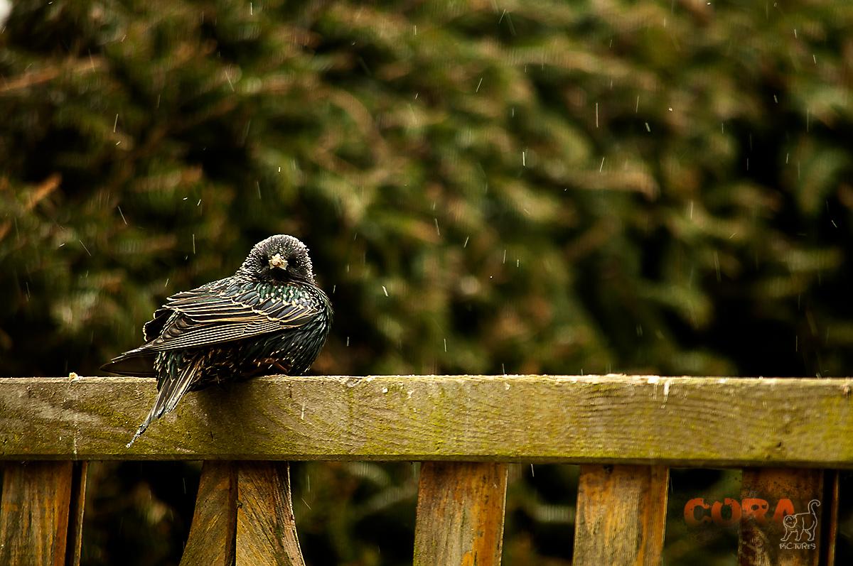*** verdammt kalt und nass ***