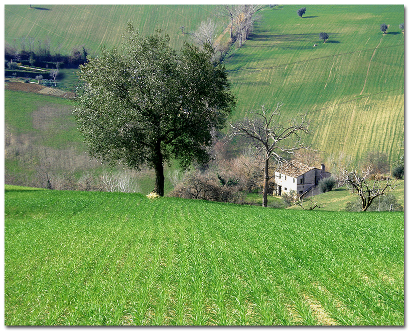 Verde Marchigiano 2