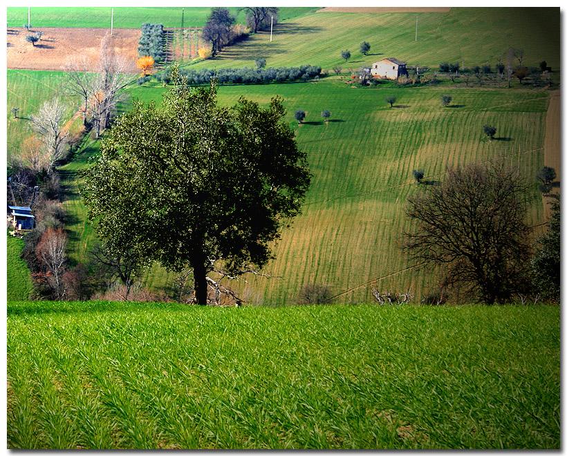 Verde Marchigiano